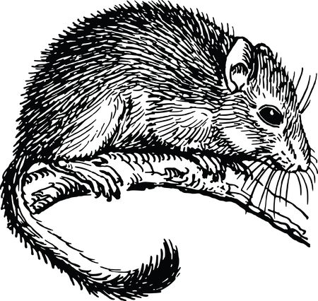 Free Clipart Of a dormouse