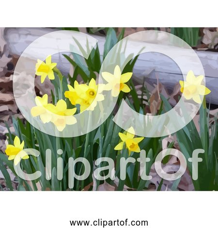 Free Clipart of Yellow Daffodils