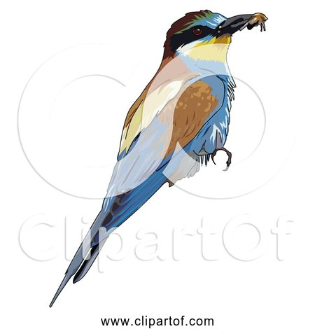 Free Clipart of European Bee-eater Bird