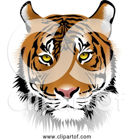 Free Clipart of Tiger Face