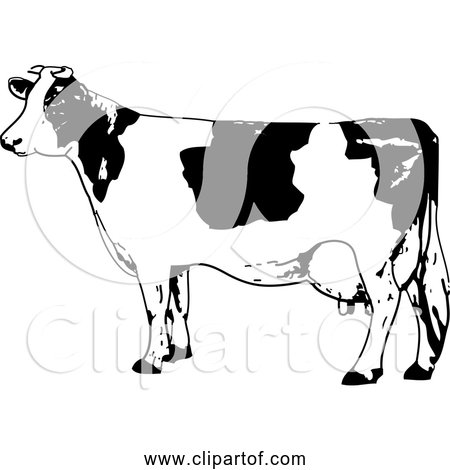 Free Clipart of Black and White Milk Cow