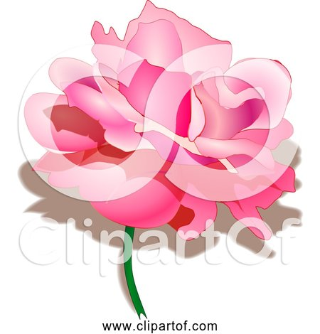 Free Clipart of Pretty Pink Rose