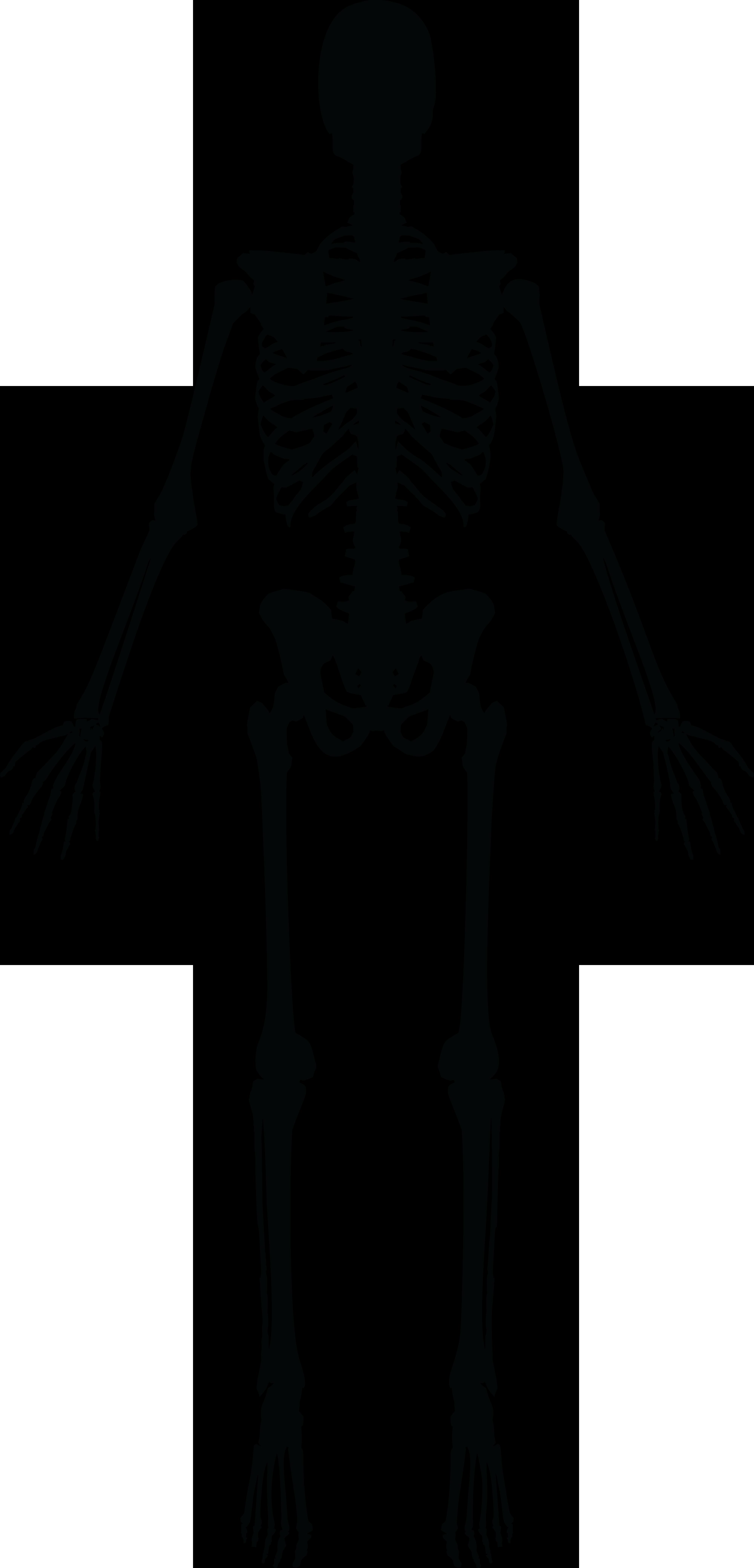 pic of human skeleton images - human anatomy image, Skeleton