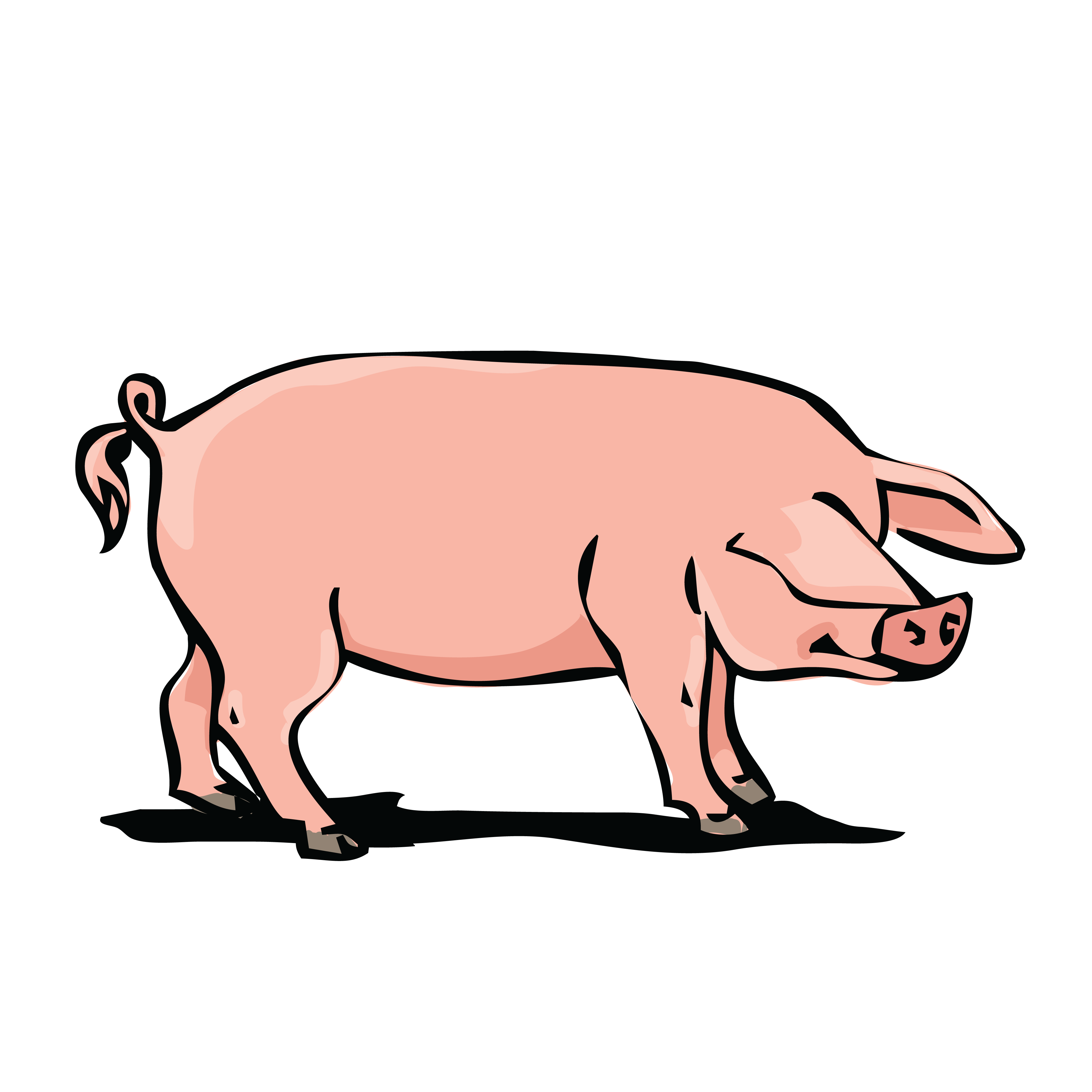 Free Clipart Of A Hog