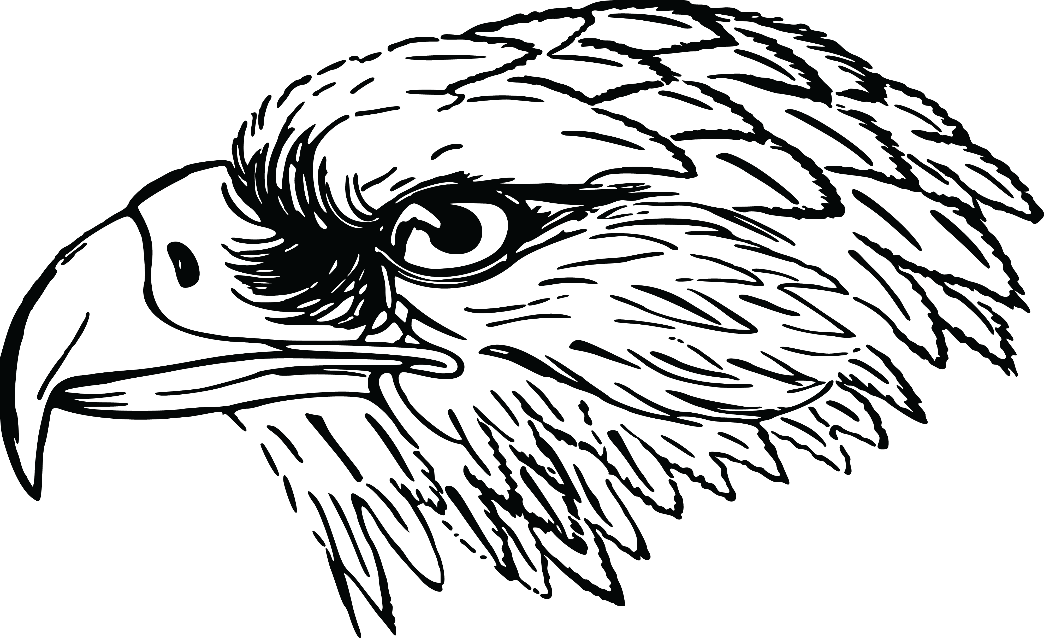 free clipart of a black and white falcon or eagle head