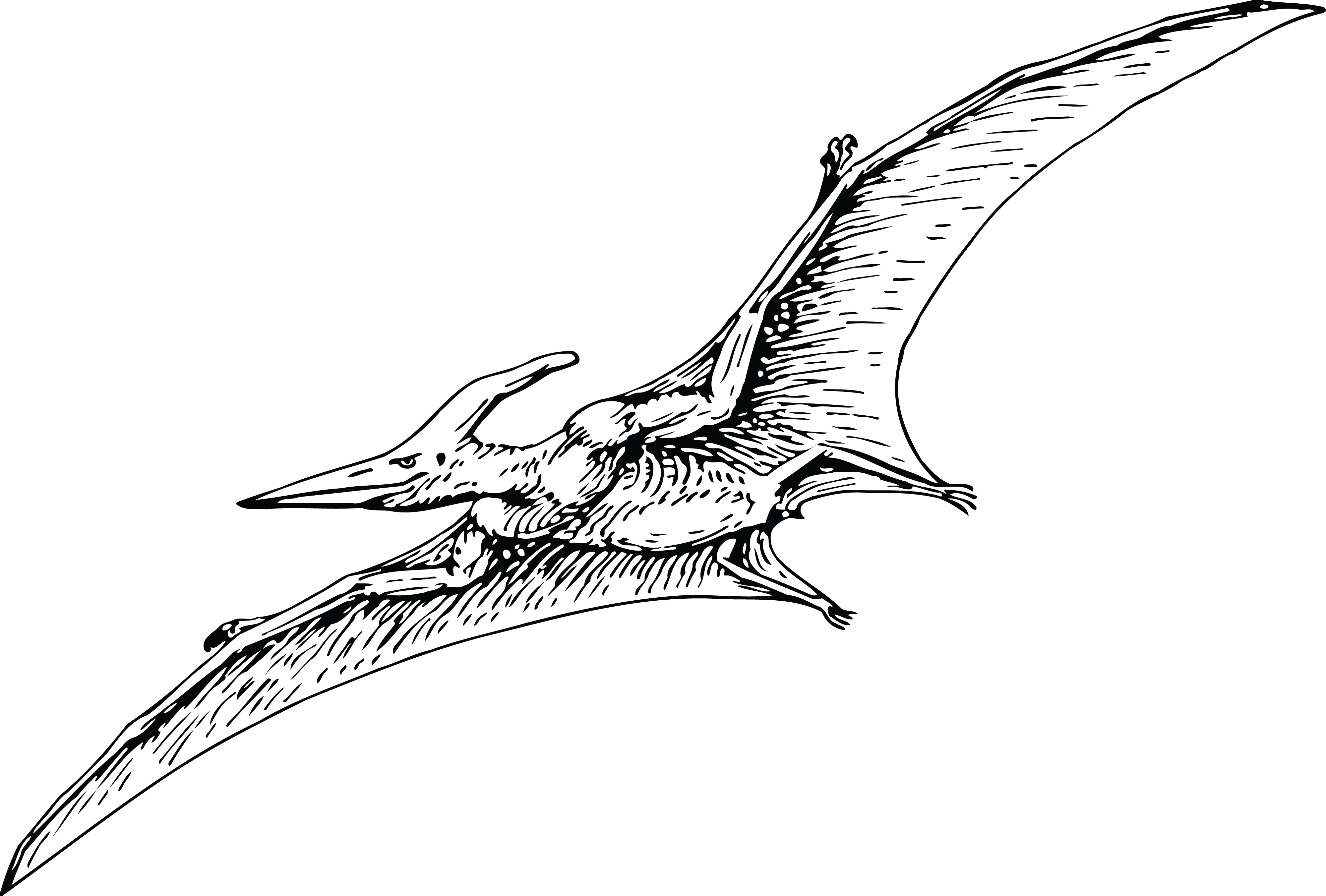 Free Clipart Of A Flying Pterodactyl