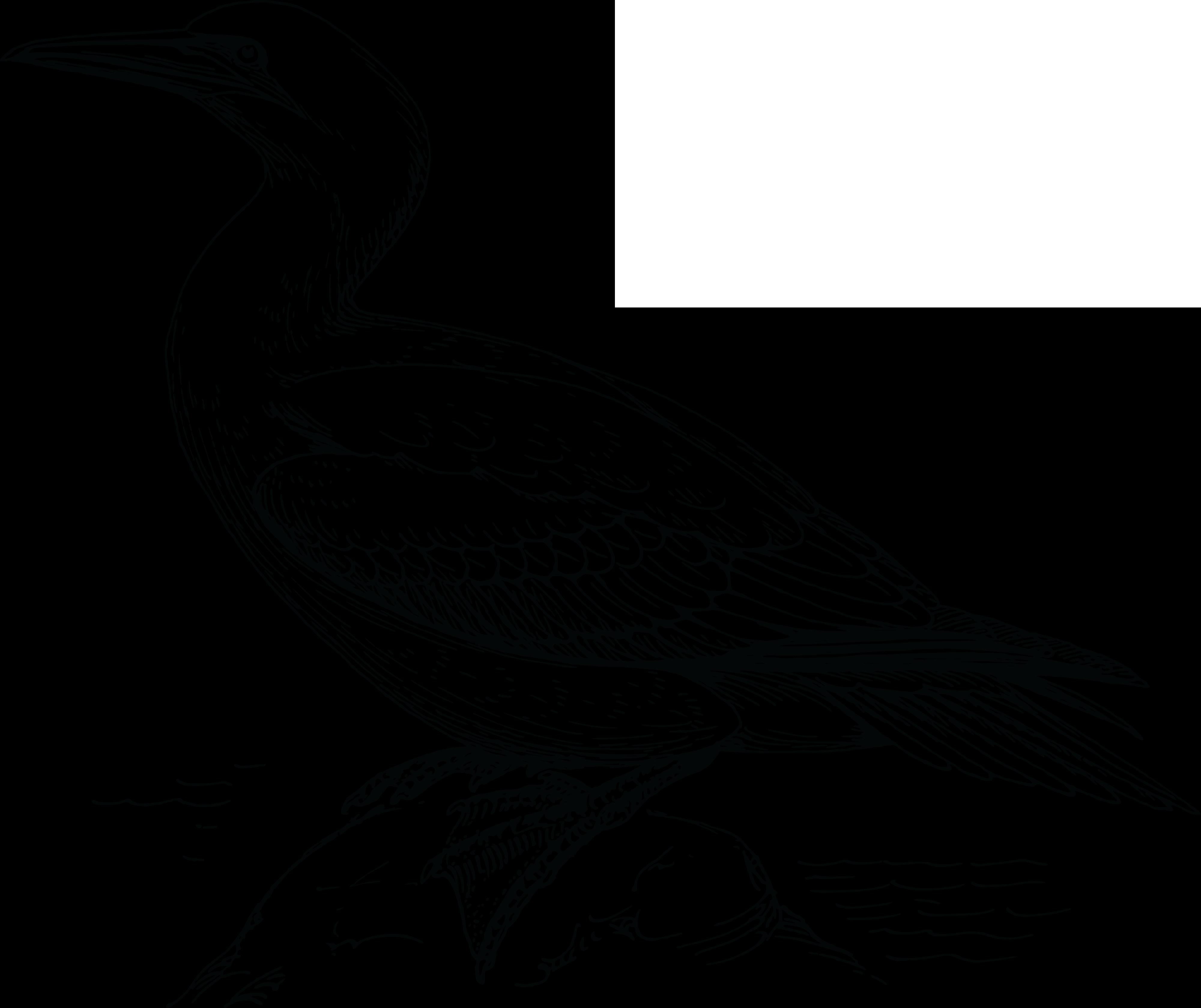 Free Clipart Of A Gan bird