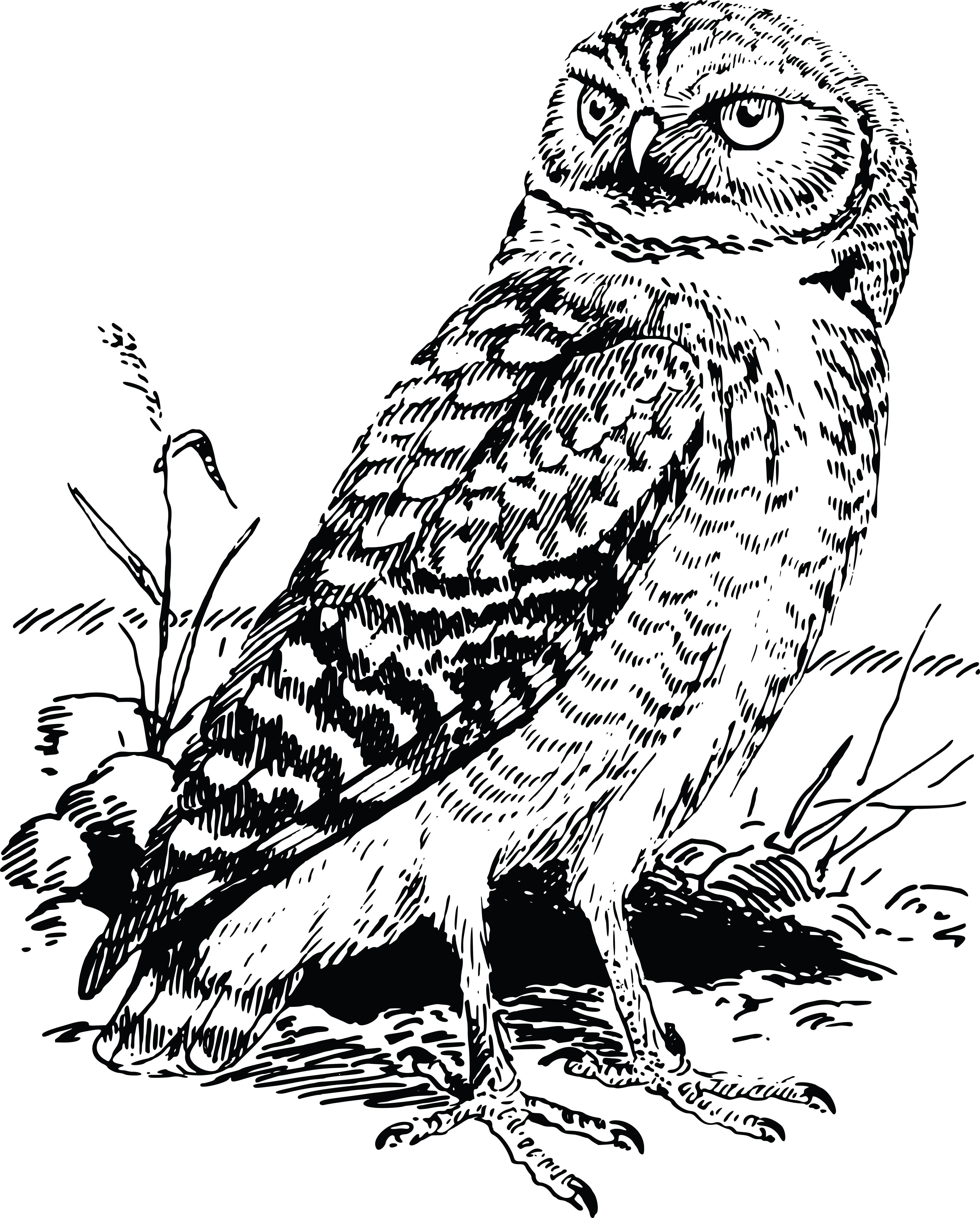 Free Clipart Of A Black and White Owl