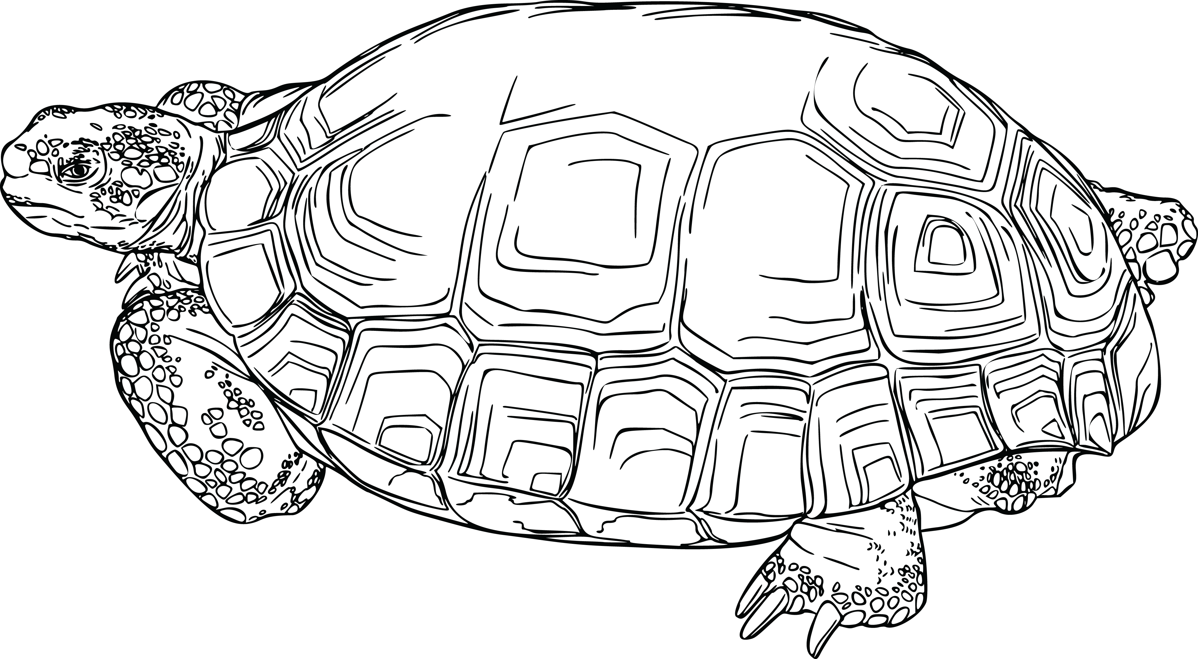 free clipart of a tortoise