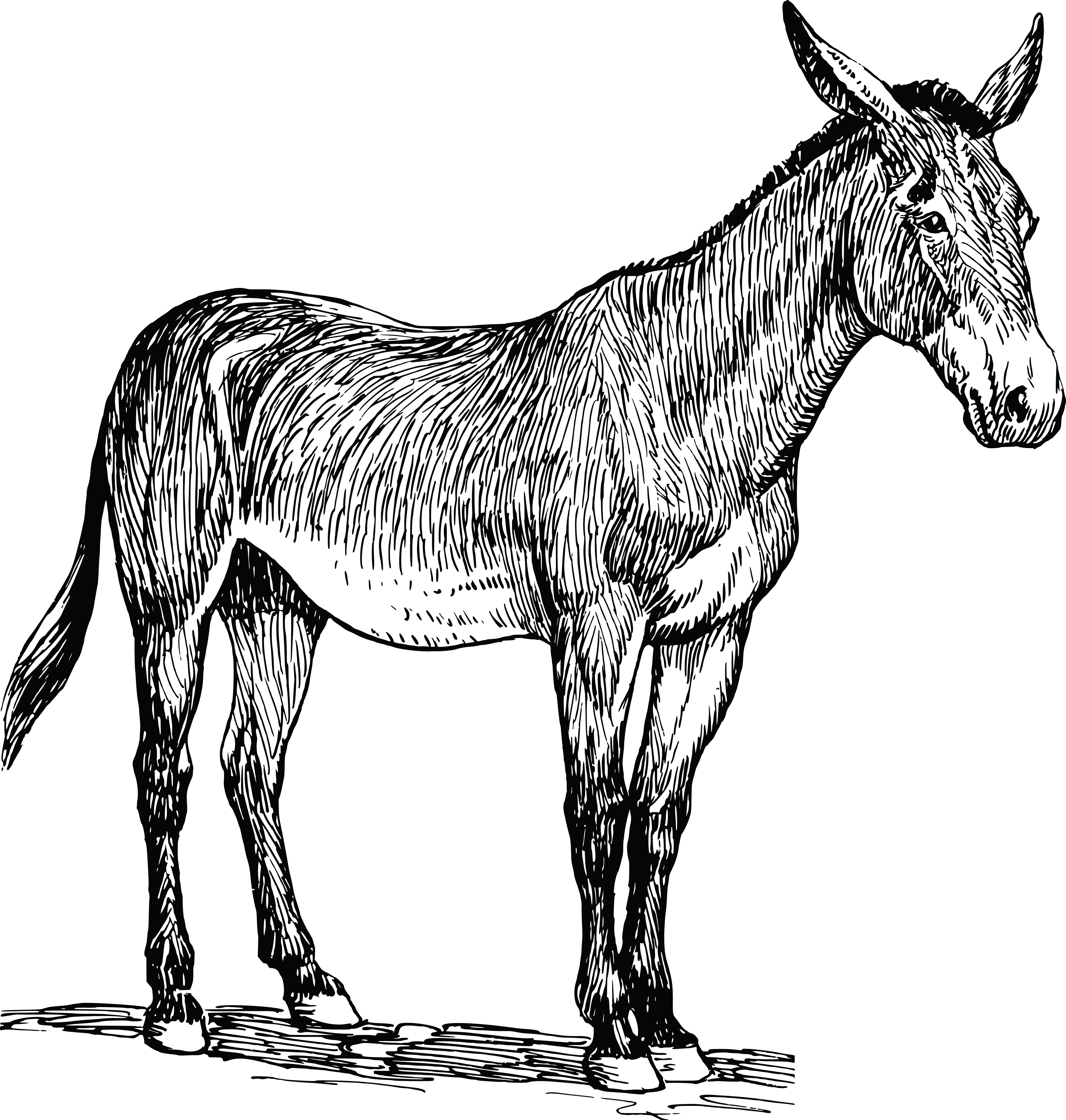Free Clipart Of A Mule