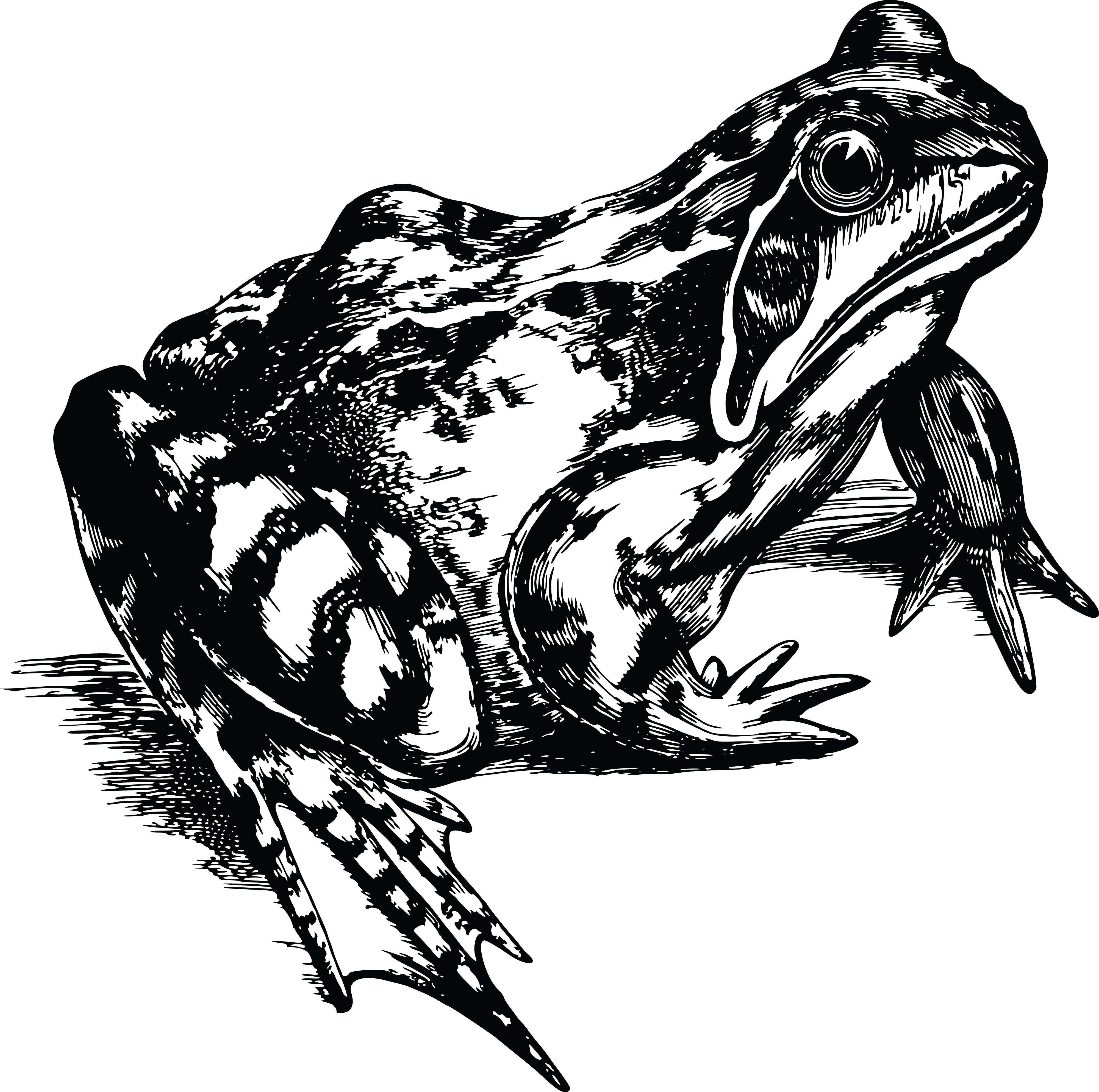 free clipart of a toad in black and white Tree Frog Vector Zebra Vector